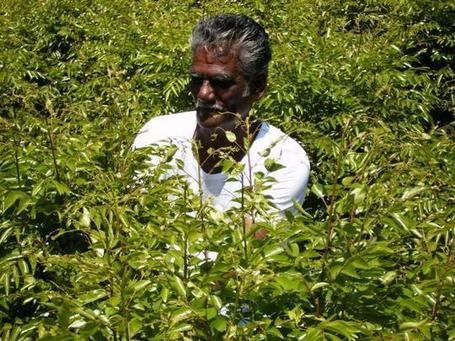 INDIA: 'If farmers are the backbone of the economy, then it is fractured' | YOUR FOOD, YOUR HEALTH: Latest on BiotechFood, GMOs, Pesticides, Chemicals, CAFOs, Industrial Food | Scoop.it