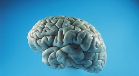 Vous avez l'âge de votre cerveau (et inversement) | Tout le web | Scoop.it