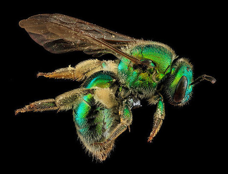 Macro photographs of bees - in pictures | 100 Acre Wood | Scoop.it