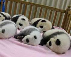 Cutest Baby Animal Photos of 2012 : Discovery News | Ask The Cat Doctor | Scoop.it