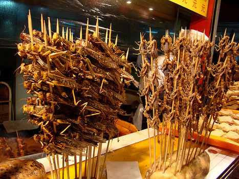 It's Time to Eat Insects | Sustain Our Earth | Scoop.it