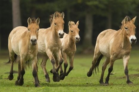 L'ASBL 100 chevaux déboutée deux fois | News | Scoop.it