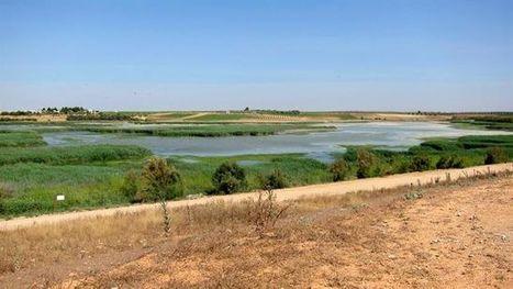 España vuelve a situarse como el país europeo con más biodiversidad | CTMA | Scoop.it