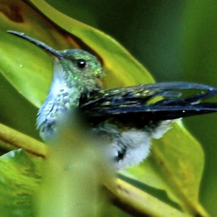 Photos de Guyane par José GAILLOU   La Guyane   Scoop.it