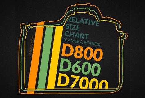 Nikon D600 vs. D800 specifications comparison | Nikon D600 & D800 | Scoop.it