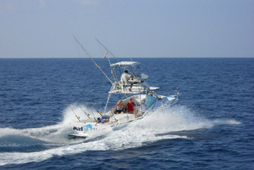 Fishing charters in Quepos Costa Rica | Quepos Realty | Scoop.it