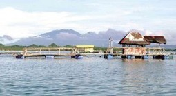 Hatchery putting Quezon on map of aquaculture - Inquirer.net | Aquaculture Directory | Scoop.it