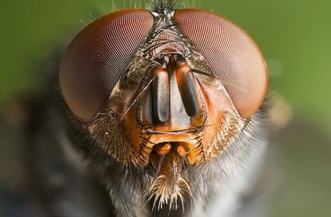 Insects Are Conscious and Egocentric | Eldritch Weird | Scoop.it