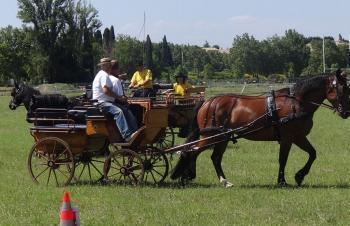 Le tourisme équestre, spécialité française - La Dépêche | éthologie équine | Scoop.it