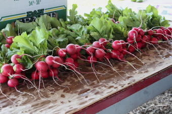 Guide to Joining a CSA « Little Miss Cruciferous   Local Food Systems   Scoop.it