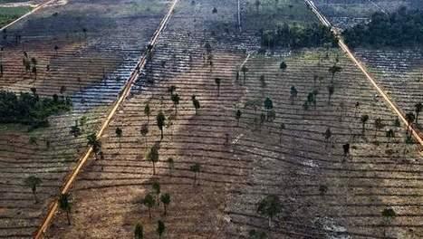 INDONESIE: Historique ! Une société d'huile de palme condamnée pour déboisement | La richesse du partage pour une vie plus responsable | Scoop.it
