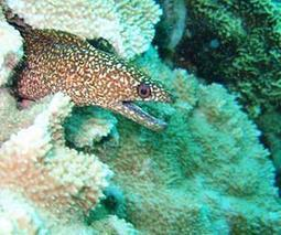 Sea life 'facing major shock' | Sustain Our Earth | Scoop.it