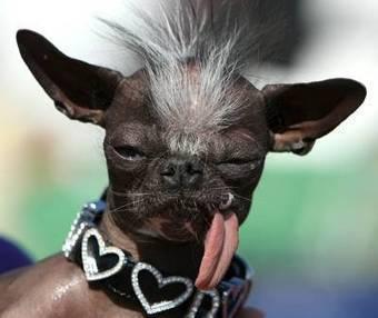Ugliest Dog Contest | Strange days indeed... | Scoop.it