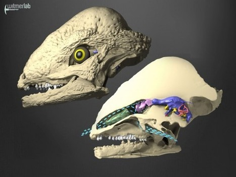 Radiator-nosed dinosaur? | Science and Nature | Scoop.it