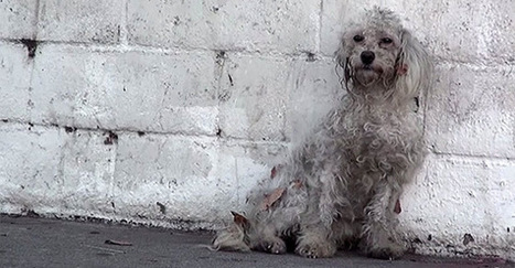 This Homeless Poodle Just Realized She's Being Rescued. Her Reaction Is The Sweetest Thing Ever.   Animal Empathy & Natural Pet Care   Scoop.it