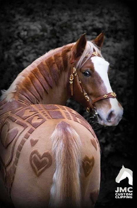 Ces chevaux ont les coupes les plus formidables jamais vues | Salon du Cheval | Scoop.it