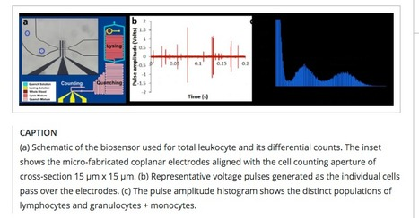 A microfluidic biochip for blood cell counts at the point-of-care | Amazing Science | Scoop.it