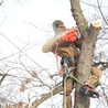 Blake's Tree Service