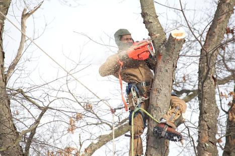 A Tree Service of Exceptional Quality | Blake's Tree Service | Scoop.it