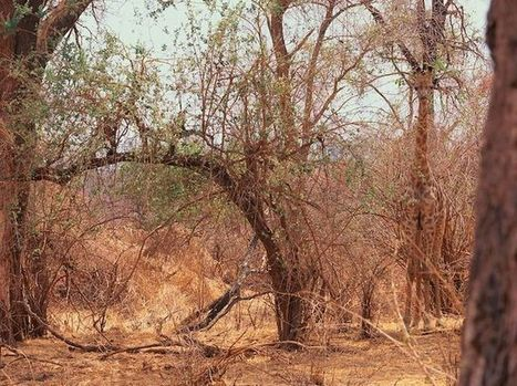 Can You Spot the Animal Hiding in the Picture? | MrsWunder's Blog | Scoop.it