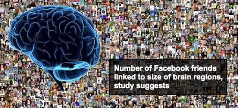 Number of Facebook Friends linked to Brain Size | Conciencia Colectiva | Scoop.it