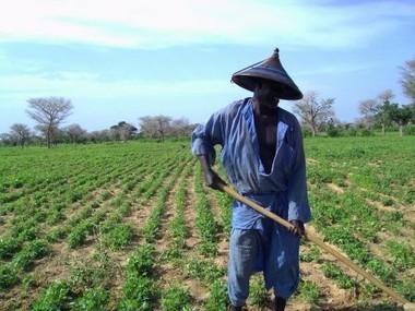 Sénégal: Les paysans renoncent à la retraite pour ne pas mourir de famine | Questions de développement ... | Scoop.it