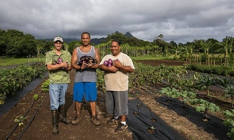 If There Are No New Farmers, Who Will Grow Our Food? | sustainablity | Scoop.it