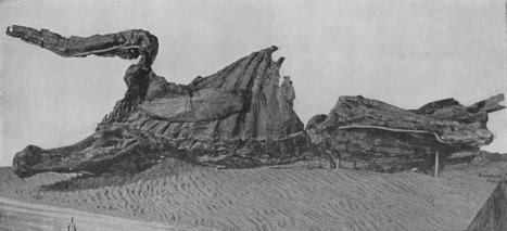 What's the Secret of Hadrosaur Skin? | Paleontology News | Scoop.it