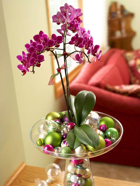 Easy Way to Grow Moth Orchids | Gardening Green | Scoop.it