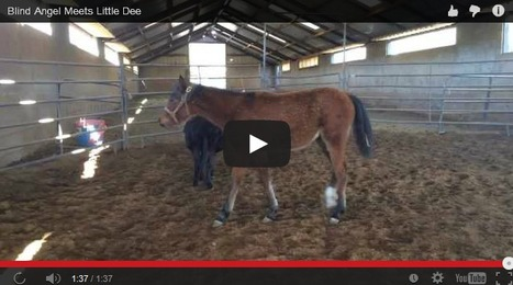 Blind Horse Angel Meets Little Dee | Cute Scoops | Scoop.it