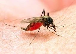Paludisme : bientôt un vaccin ? | Médicaments et traitements | Scoop.it