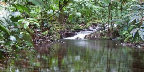 Le grand orchestre de la nature se tait peu à peu | Nature et Vie | Scoop.it