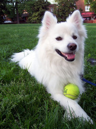 Burgess Pet Care » Blog Archive » 10 Activities to Keep Your Dog from Boredom | Dogs | Scoop.it