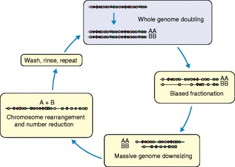 Evolution of plant genome architecture | MycorWeb Plant-Microbe Interactions | Scoop.it