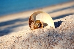 sustainability news: Increase in Tourism Impacts Seashell Loss   Adventure Tourism   Scoop.it