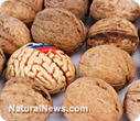 High on food - New studies show that diet alters brain functions | The Brain and Learning | Scoop.it