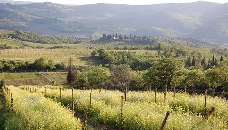 Not just organic, but biodynamic! Italy's largest VEGAN vineyard... | Grande Passione | Scoop.it