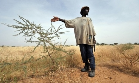 Creating a fertile future for smallholder farmers in Africa   Food Security   Scoop.it