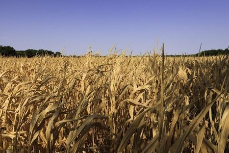 Le commerce mondial des grains n'en finit plus de croître | Questions de développement ... | Scoop.it