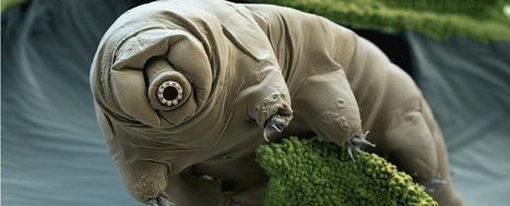 The tardigrade genome has been sequenced, and it has the most foreign DNA of any animal | Chair et Métal - L'Humanité augmentée | Scoop.it