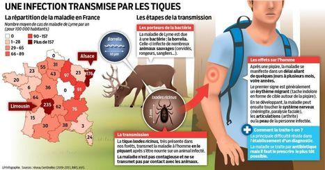 Alerte aux tiques : méfiance en forêt, dans les parcs et les champs | Neo News Santé | Scoop.it