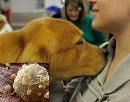 Proyecto para mejorar la detección temprana del cáncer gracias al olfato de los perros | I didn't know it was impossible.. and I did it :-) - No sabia que era imposible.. y lo hice :-) | Scoop.it