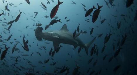 Pourquoi l'acidification des océans pourrait, à terme, coûter des milliards d'euros à la planète | Toxique, soyons vigilant ! | Scoop.it