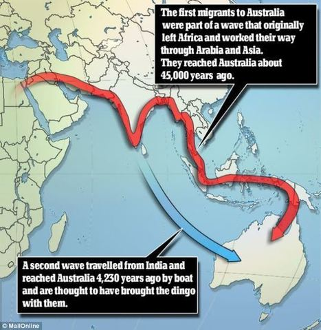 Migrants from India settled in Australia 4,000 years ago before Captain Cook's arrival (and they took their dingos with them) | Aboriginal and Torres Strait Islander Studies | Scoop.it
