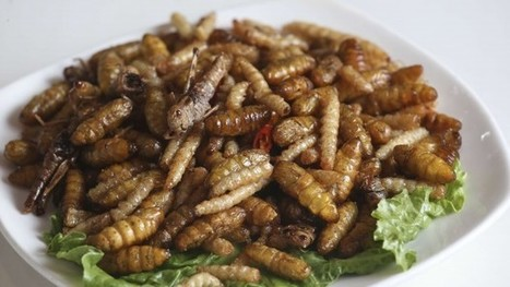 Lovely grub, say Hong Kong's insect eaters: delicious, nutritious and good for the planet | Entomophagy: Edible Insects and the Future of Food | Scoop.it
