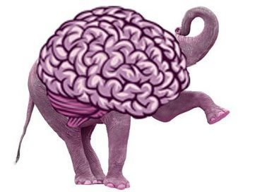 The Surprising Brain Differences Between Democrats and Republicans | enjoy yourself | Scoop.it