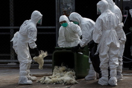 Avian influenza H7N9 outbreak now at 246 cases in China, HK culls 20,000 birds | Virology and Bioinformatics from Virology.ca | Scoop.it