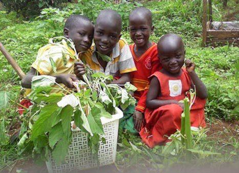 Slow Food's 1,000 Sustainable Gardens for Africa | School Kitchen Gardens | Scoop.it