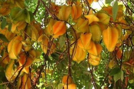 Top 20 Fruits You Probably Don't Know - Listverse | My Life In Food | Scoop.it