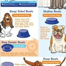 How to choose the best bowl for your dog's breed   Visual.ly   Random   Scoop.it